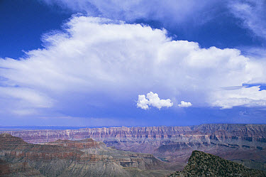 Storm clouds over Grand Canyon National Park view from Cape Royal, North Rim, Arizona  -  Nigel Bean/ npl