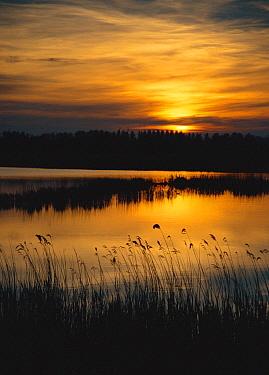 Evening sunset view across fen with open water, Strumpshaw Fen RSPB Reserve, Norfolk, United Kingdom  -  Nick Barwick/ npl
