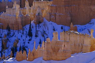 Hoodoos and fins after spring snowfall, Bryce Canyon National Park, Utah  -  Larry Michael/ npl