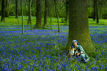 Miriam Rothschild with dogs in her bluebell wood, 1981 Northamptonshire, United Kingdom  -  Tony Evans/ npl