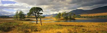 Loch Tulla in the Western Highlands of Scotland  -  Gavin Hellier/ npl
