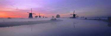Windmills at dawn, Kinderdijk, South Holland, Netherlands  -  Gavin Hellier/ npl