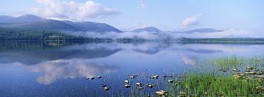 Dawn over Loch Morlich, Cairngorms National Park, Scotland  -  Pete Cairns/ npl