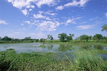 Lake in Kaziranga National Park, Assam, India  -  Toby Sinclair/ npl
