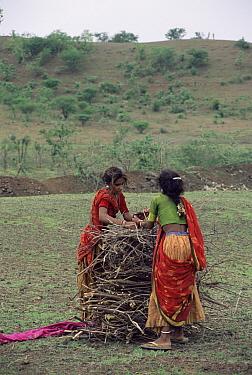 Girls collecting firewood, Maharashtra, India  -  Toby Sinclair/ npl