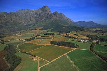 Vineyards in Franshoek Valley, South Africa  -  Richard Du Toit