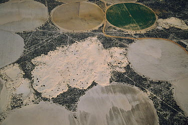 Potato farms showing irrigation circles, Sandveld, South Africa  -  Richard Du Toit