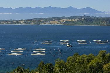 Salmon (Salmonidae) farm near Puerto Montt, Chile  -  Kevin Schafer