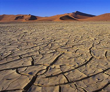 Dry lake bed in desert, Sossusvlei, Namib Desert, Namibia  -  Martin Withers/ FLPA