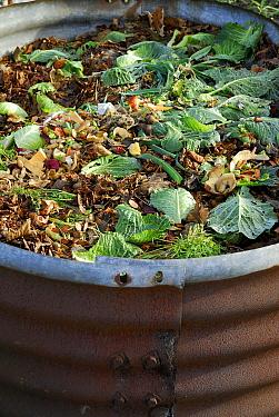 Compost pile with vegetable scraps, Norfolk, England  -  David Burton Holt/ FLPA