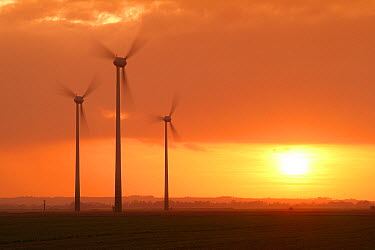 Wind mills at sunset, Lincolnshire, England  -  David Burton Holt/ FLPA
