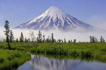Snow-covered Kronotsky Volcano rises above taiga and river, Kronotsky Zapovednik, Kamchatka, Russia  -  Igor Shpilenok/ npl