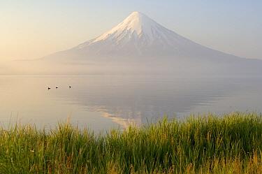 Ducks on lake with Kronotsky Volcano in the background, Kamchatka, Russia  -  Igor Shpilenok/ npl