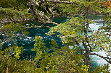 Petrohue River, Vicente Perez Rosales National Park, Chile  -  Kevin Schafer