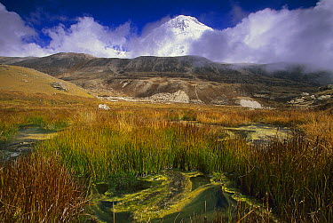 Alpine marsh and reeds, Hinku Valley, Makalu-Barun National Park, Nepal  -  Colin Monteath/ Hedgehog House