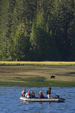 Black Bear (Ursus americanus) and tourists, Vancouver Island, British Columbia, Canada  -  Norbert Wu