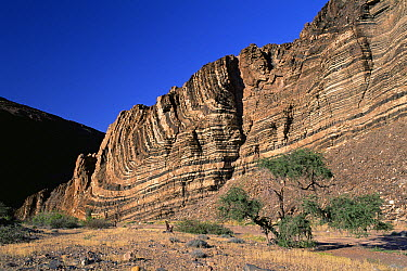 Geologic folding in lower Ugab Valley, Damaraland, Namibia  -  Michael & Patricia Fogden