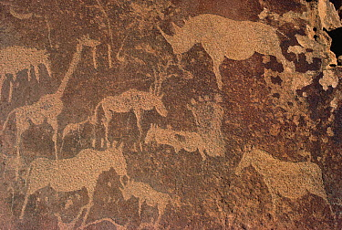 Petroglyphs of animals hunted by bushmen, Twyfelfontein, Namibia  -  Michael & Patricia Fogden