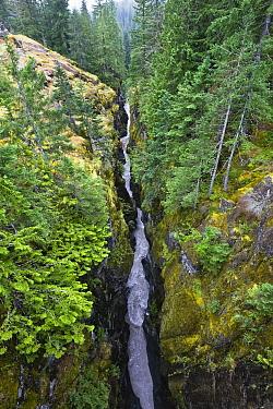 Box Canyon with flowing stream, Mount Rainier National Park, Washington  -  Konrad Wothe