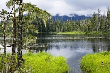 Crane Lake, Tongass National Forest, Mitkof Island, southeast Alaska  -  Konrad Wothe