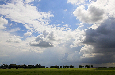 Thunderhead clouds over polder landscape, Stompwijk, South Holland, Netherlands  -  Aad Schenk/ NiS