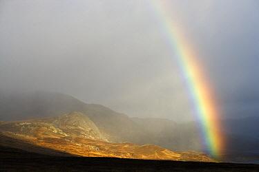 Approaching storm and rainbow over tundra, Hardangervidda, Norway  -  Chris Stenger/ Buiten-beeld
