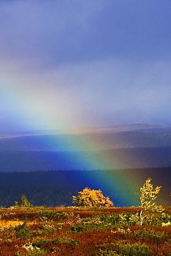 Rainbow over the tundra in autumn, Flatruet, Sweden  -  Heike Odermatt