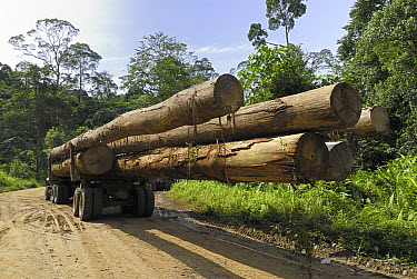 Truck with timber from a logging area, Danum Valley Conservation Area, Borneo, Malaysia  -  Thomas Marent