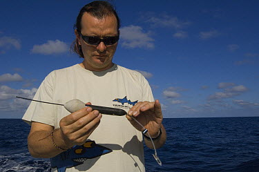 Researcher James Ketchum with satellite tag for tagging shark, Wolf Island, Galapagos Islands, Ecuador  -  Pete Oxford