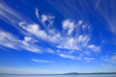 White cirrus clouds floating in clear blue sky over Bay of Fundy in summer, New Brunswick, Canada  -  Yva Momatiuk & John Eastcott