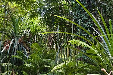 Rainforest interior, Havelock Island, India  -  Konrad Wothe