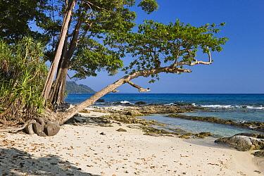 Coastal rainforest, Havelock Island, India  -  Konrad Wothe