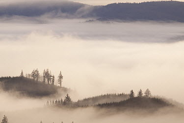 Fog in the valleys of coastal mountains, Clatsop State Forest, Oregon  -  Michael Durham