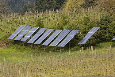 Solar panels providing about thirty percent of winery's power needs, Dundee, Oregon  -  Michael Durham