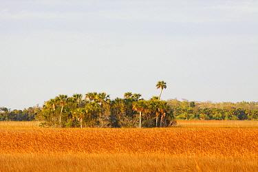 Palm cluster, Big Cypress National Preserve, Florida  -  Scott Leslie