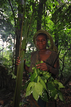 Ngongo (Megaphrynium macrostachyum) stems and leaves used by Baka woman to make a mat, Cameroon  -  Cyril Ruoso
