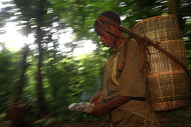 Baka woman carrying baby in large basket while traveling through the rainforest, Cameroon  -  Cyril Ruoso