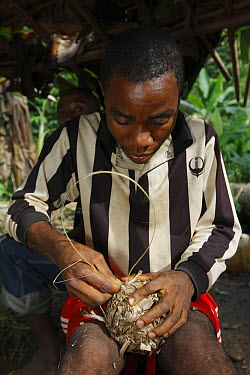 Baka man making a soccer ball from leaves, Cameroon  -  Cyril Ruoso