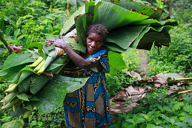 Baka woman is the oldest in the community and still carries leaves to cover a hut, Cameroon  -  Cyril Ruoso