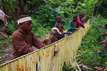 Baka tribe members using fiber to make crowns and clothing for the spirit figure that will dance with them at a hunting ceremony, Cameroon  -  Cyril Ruoso