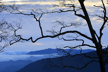 View from Mount Omine, a holly mountain, Yoshino-Kumano National Park, Japan  -  Cyril Ruoso