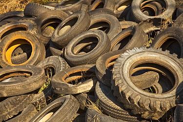Abandoned car tires in junkyard, Christchurch, New Zealand  -  Colin Monteath/ Hedgehog House