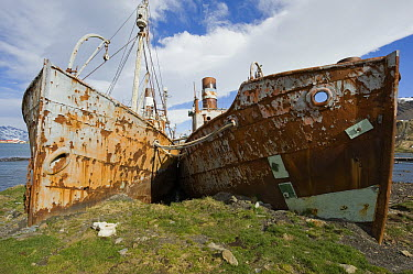 Old whaling ships stranded in abandoned whaling station, Leith, South Georgia Island  -  Flip  Nicklin
