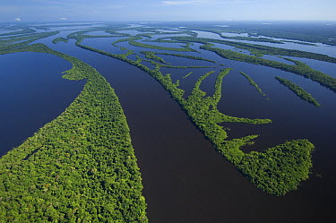 Flooded forest, habitat for the Amazon River dolphin, Anavilhanas Archipelago, Rio Negro, Amazon, Brazil  -  Kevin Schafer