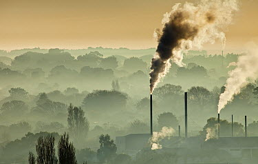Factory chimneys belch smoke, winter smog makes it hard to see houses between trees, Christchurch, Canterbury, New Zealand  -  Colin Monteath/ Hedgehog House