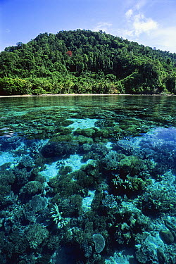 Tropical rainforest and coral, Batanta Island, Indonesia  -  Konrad Wothe