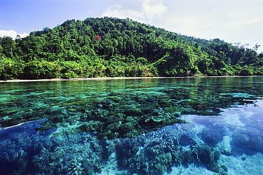 Tropical rainforest and corals, Batanta Island, Indonesia  -  Konrad Wothe