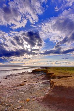 Mudflats in salt marsh, Bay of Fundy, Nova Scotia, Canada  -  Scott Leslie