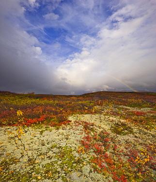 Rainbow and cumulonimbus clouds above fall tundra, Denali National Park, Alaska  -  Yva Momatiuk & John Eastcott