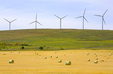 Windmills in wheat fields of a traditional farming community, Alberta, Canada  -  Yva Momatiuk & John Eastcott